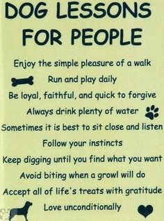 These are great lessons. Well done, dog friends!