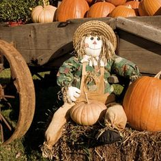 Pumpkins can be used as a decoration and a game item at your fall party.