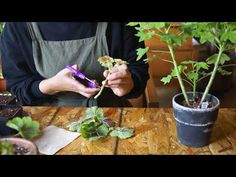 Sprouts, Vegetables, Green, Youtube, Plants, Vegetable Recipes, Plant, Youtubers, Veggies