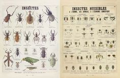 Deyrolle - Lecons de choses tome 2 - Insectes / Insectes Nuisibles