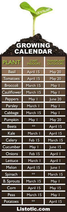 Plant Your Vegetable Garden ⋆ Listotic Vegetable garden growing calendar with starting and transplanting dates. If only I had a green thumb.Vegetable garden growing calendar with starting and transplanting dates. If only I had a green thumb. Veg Garden, Garden Types, Lawn And Garden, Terrace Garden, Veggie Gardens, Vegetables Garden, Potager Garden, Vegetable Planters, Spring Garden