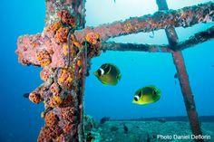 Plongée sur l'épave du Stella Maru à l'île Maurice
