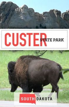Vacation at Custer State Park in the Black Hills of South Dakota! Find out the best hikes, creekside campground, scenic drives, wildlife, and more! Wisconsin, Michigan, South Dakota Vacation, Travel Usa, Travel Tips, Travel Destinations, Custer State Park, Best Campgrounds, Best Hikes