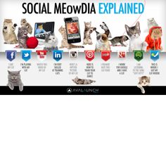 Social Media Explained With Cute Kittens #facebook #twitter #instagram #youtube #socialmedia