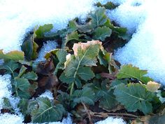 8 Snow-Hardy Vegetables You (Really) Can Grow During Winter