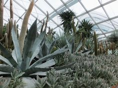 Alternative Eden Exotic Garden: Succulents in the Dome