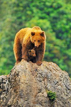 Bear Cub sheltering from the rain