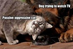 Funny Animal Pictures Of The Day – 40 Pics