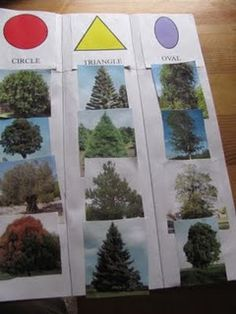 Learning about Forests I tree shapes Creative Curriculum Preschool, Fall Preschool, Kindergarten Science, Preschool Lessons, Preschool Activities, Preschool Journals, Animal Activities, Outdoor Education, Outdoor Learning
