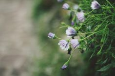 floralls:  248 (by gginapetxina)