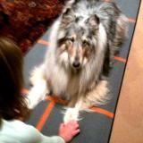 Big Dogs Do DOGA!