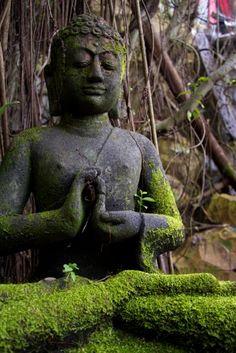 Secret Sanctuary, Borneo