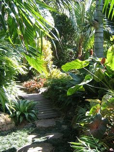 #tropical #landscaping path