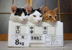 猫画像が集まるスレwwwwwww