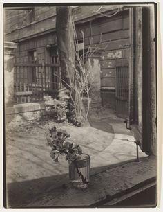 Josef Sudek, On the Windowsill of My Studio – Blossom, 1950–1954