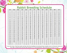 Easy Peasy Rabbit Breeding Schedule