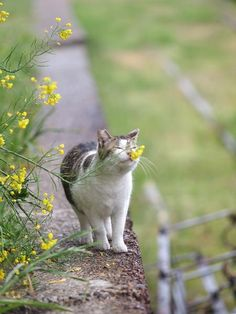 Smell The Flowers kitty cat - spring is around the corner! I Love Cats, Crazy Cats, Cute Cats, Funny Cats, Animals And Pets, Funny Animals, Cute Animals, Beautiful Cats, Animals Beautiful