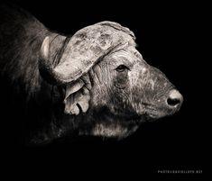 Black and White Selection | David Lloyd Wildlife Photography