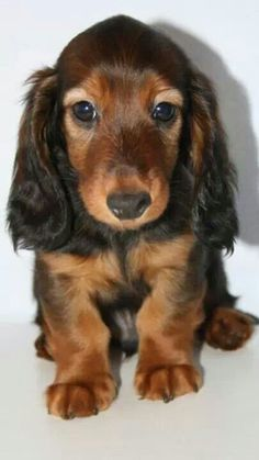 Omg, it's Baby as a puppy!
