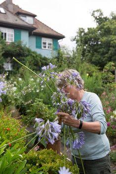 Hermann Hesse, Zinnia Garden, Fruit Trees, Flower Beds, Flowers, Plants, Google, Tiles, Nature