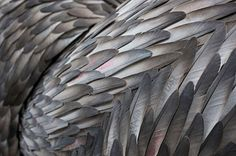 Feather art sculpture by Kate McGwire.