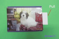 Cards ,Crafts ,Kids Projects: Easy Interactive Card Tutorial