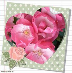 Sie finden auf dieser Seite lizenzfreie, weil von mir selbst fotografierte und verschönerte Bilder, kostenlos zum Download. #flower #picture #nice #nature #lovely #animel