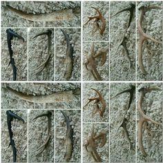 Letitbwild #antlers #home #hoorns