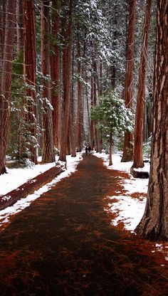 A couple enjoy the walk through the trees near the Lower Yosemite Falls in California • photo: Benjamin on Flickr