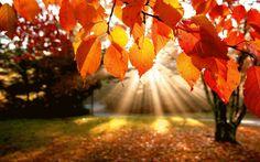 Repara que o outono é mais estação da alma do que da natureza. Carlos Drummond de Andrade