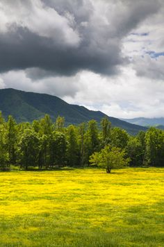No better place to be than in Cades Cove, Tennessee!