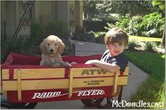 Goldendoodle and his boy - Moss Creek Goldendoodles