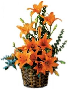 Lily Extravaganza Flower Basket to Saint-Pierre-and-Miquelon Cheap Flowers, Flowers For You, Mauritius, Maldives, Flower Centerpieces, Flower Arrangements, Buy Flowers Online, Line Flower, Ibiza Spain