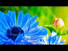 Morning Relaxing Music - Peaceful and Relaxing Piano Music (Julia) Relaxing Gif, Relaxing Music, Morning Music, Chant, Piano Music, Classical Music, Meditation, Peace, Relaxation Video
