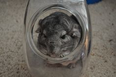Good idea for a chinchilla dust bath house! ♡