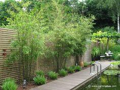 Comkleiner Garten Sichtschutz : sichtschutz garten pflanzen - Google ...