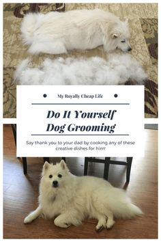 102915 st louis mo american eskimo dogsamoyed mix meet diy dog grooming solutioingenieria Gallery