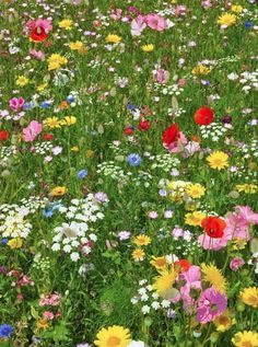 Go Wild In Your Garden… If you are fed up with the same old bedding plants, and frost bitten lawn and fancy a change, then why not go wild in your garden, and plant some wild flowers in either your grass or flower beds.