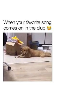Cute Wild Animals, Baby Animals Pictures, Super Cute Animals, Cute Little Animals, Cute Animal Pictures, Funny Pictures, Funny Animal Jokes, Funny Dog Memes, Funny Animal Videos