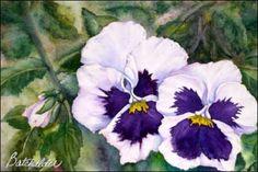 Pansy Faces Transparent Watercolor
