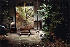 "Lucian Freud ""Painters Garden with Eli"", 2006.  David Dawson, courtesy of Hazlitt Holland-Hibbert Gallery by guida"