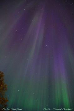 Auroras boreales en Salla, Finnish-Lapland, Finlandia.-