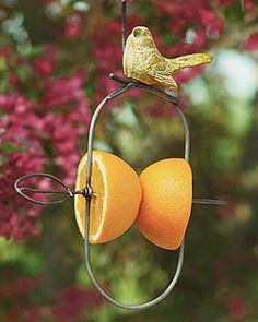 "Fruit Feeder: Use halved apples, oranges, grapefruit or pears Comes with built-in hanger Small, decorative ceramic bird on top Can be used all year round Orioles, scarlet tanagers, mockingbirds, grosbeaks and other fruit-lovers will flock to this simple yet clever ""kabob-style"" birdfeeder. Simply place halved oranges, apple, pear or grapefruit on the skewer and hang."