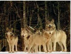 Outdoor Quest: Wolves