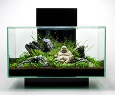 fluval edge aquascape - Google Search