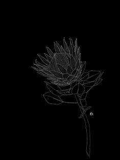 Fine line botanical drawing Black Tattoos, New Tattoos, Wicked Tattoos, King Protea, Line Drawing, Drawing Ideas, Black White Art, Botanical Drawings, Freelance Illustrator