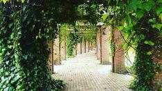 Country Roads, World, Nature, Flowers, Instagram, Colombia, Naturaleza, Fotografia, Florals