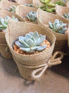 Succulent Gardening, Succulent Terrarium, Planting Succulents, Succulent Ideas, Flower Planters, Flower Pots, Flowers, Wedding Doorgift, Jungle Theme Birthday