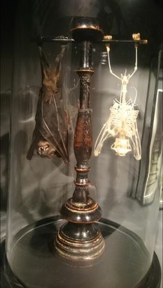 Taxidermy bat & bat skeleton