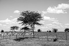 Photo by Gilberto Grosso - A landscape dominated by drought inclement 5